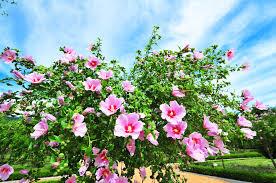 Từ vựng tiếng Hàn về các loài hoa